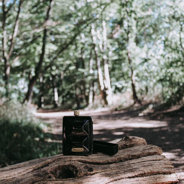 Travel Box auf Baumstamm vor Waldallee